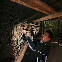 084-projekt-po-sohraneniju-Dymchatogo-Leoparda-Bangkok-zoo-january-2008