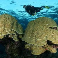 045-Острова-Бразерс,-Красное-Море,-Ноябрь-2014