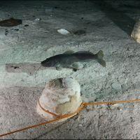 018-Пещеры-Мексики-Ноябрь-2012