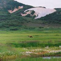 027-Медведица-с-медвежонком-в-Кальдере-Вулкана-Узон