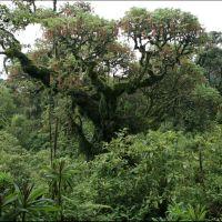 003-Руанда-Декабрь-2012