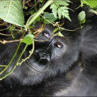 011-Руанда-Декабрь-2012