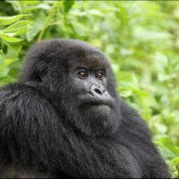 012-Руанда-Декабрь-2012