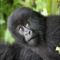 013-Руанда-Декабрь-2012