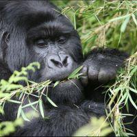 014-Руанда-Декабрь-2012
