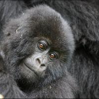 015-Руанда-Декабрь-2012