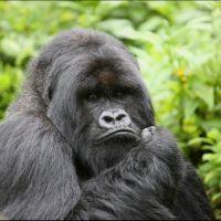 016-Руанда-Декабрь-2012