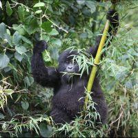 018-Руанда-Декабрь-2012