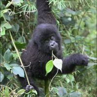 019-Руанда-Декабрь-2012