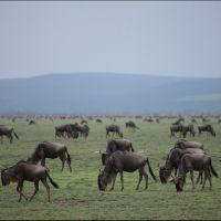 003-Танзания-январь-2013