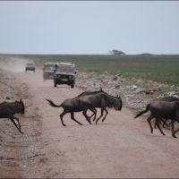 004-Танзания-январь-2013