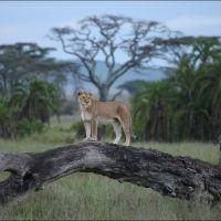 005-Танзания-январь-2013