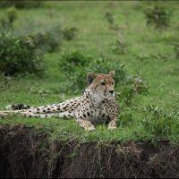 006-Танзания-январь-2013