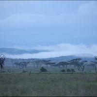 018-Танзания-январь-2013