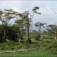 025-Танзания-январь-2013