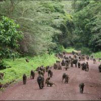 033-Танзания-январь-2013
