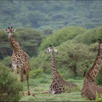 034-Танзания-январь-2013