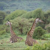 035-Танзания-январь-2013