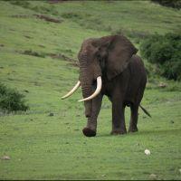 039-Танзания-январь-2013