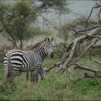 041-Танзания-январь-2013