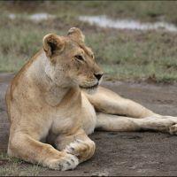 042-Танзания-январь-2013