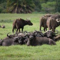 045-Танзания-январь-2013