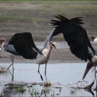 048-Танзания-январь-2013
