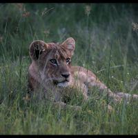 003-Chiefs-Camp-Moremi-Game-reserve-Ботсвана-декабрь-2008