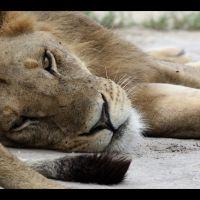 004-Chiefs-Camp-Moremi-Game-reserve-Ботсвана-декабрь-2008