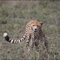 008-Национальный-парк-Ruaha-Танзания-январь-2007
