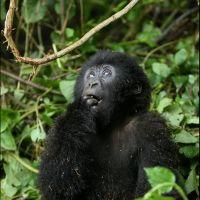 017-Park-De-Volcanoes-Руанда-декабрь-2006