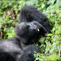 018-Park-De-Volcanoes-Руанда-декабрь-2006