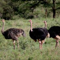 042-Samburu-National-Reserve-Кения-декабрь-2005